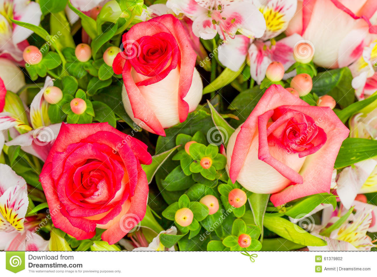floral big and beautiful singles Singaporecupidcom online dating site (under maintenance) best florists with beautiful floral deciding to propose to the love of your life is a very big.