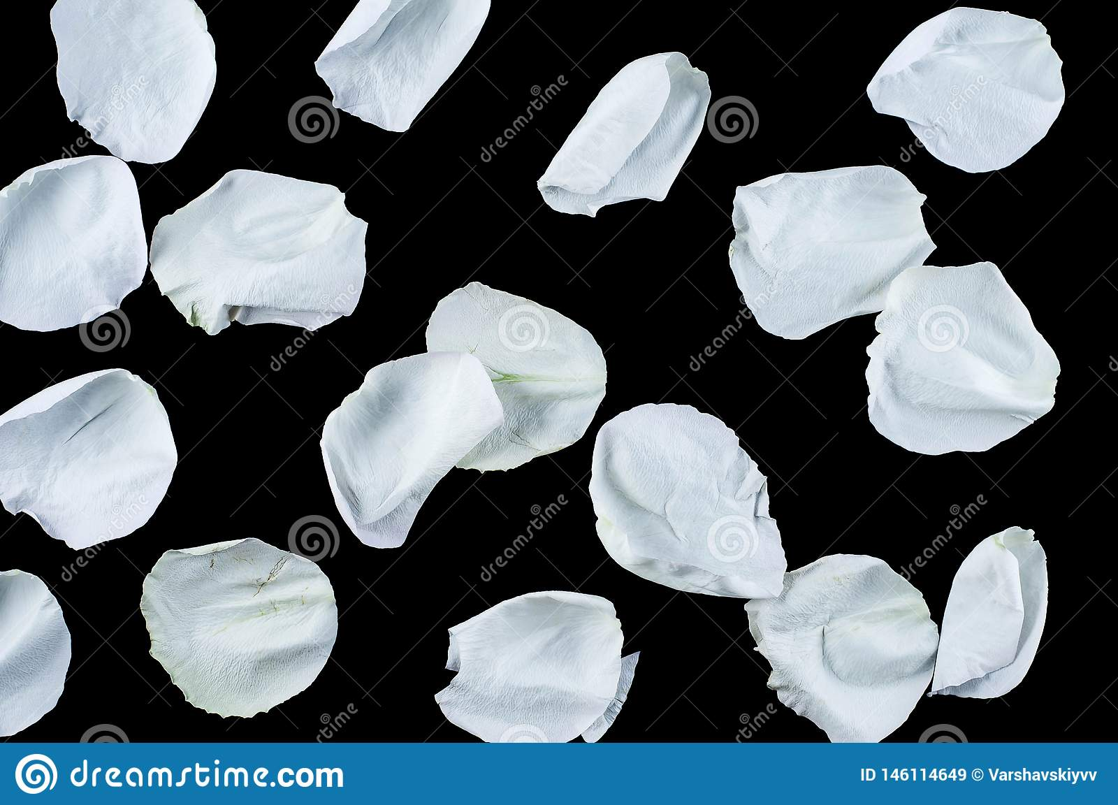 Roses and petals flowers on different backgrounds