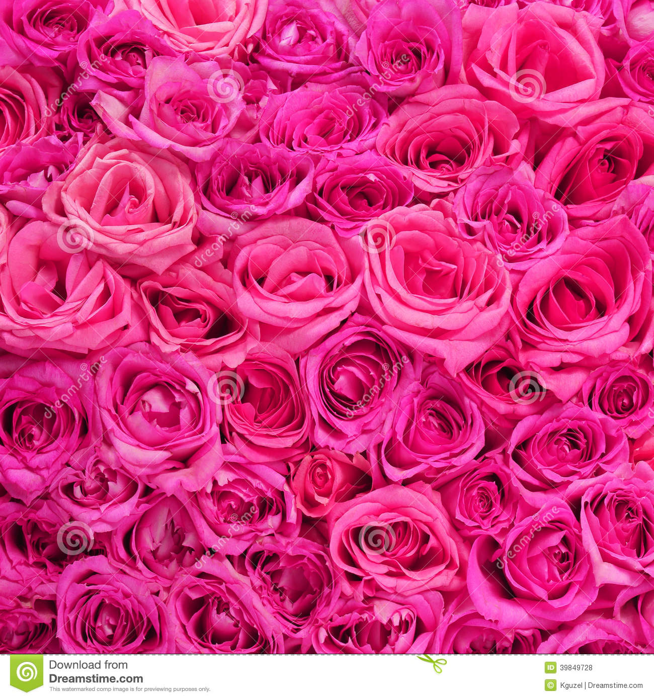 roses. pink flowers background stock photo  image, Natural flower