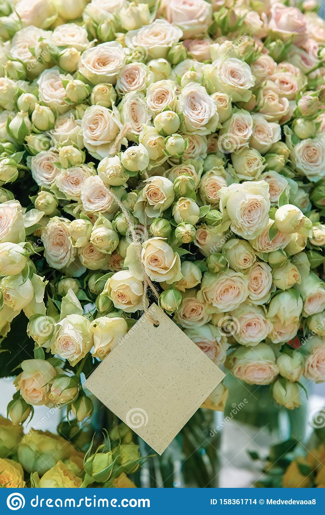 Roses Of Pink Salmon And Mint Green Flowers Of Modern Varieties In A Bouquet For A Gift Background Selective Focus Wallpaper Stock Photo Image Of Gift Petal 158361714