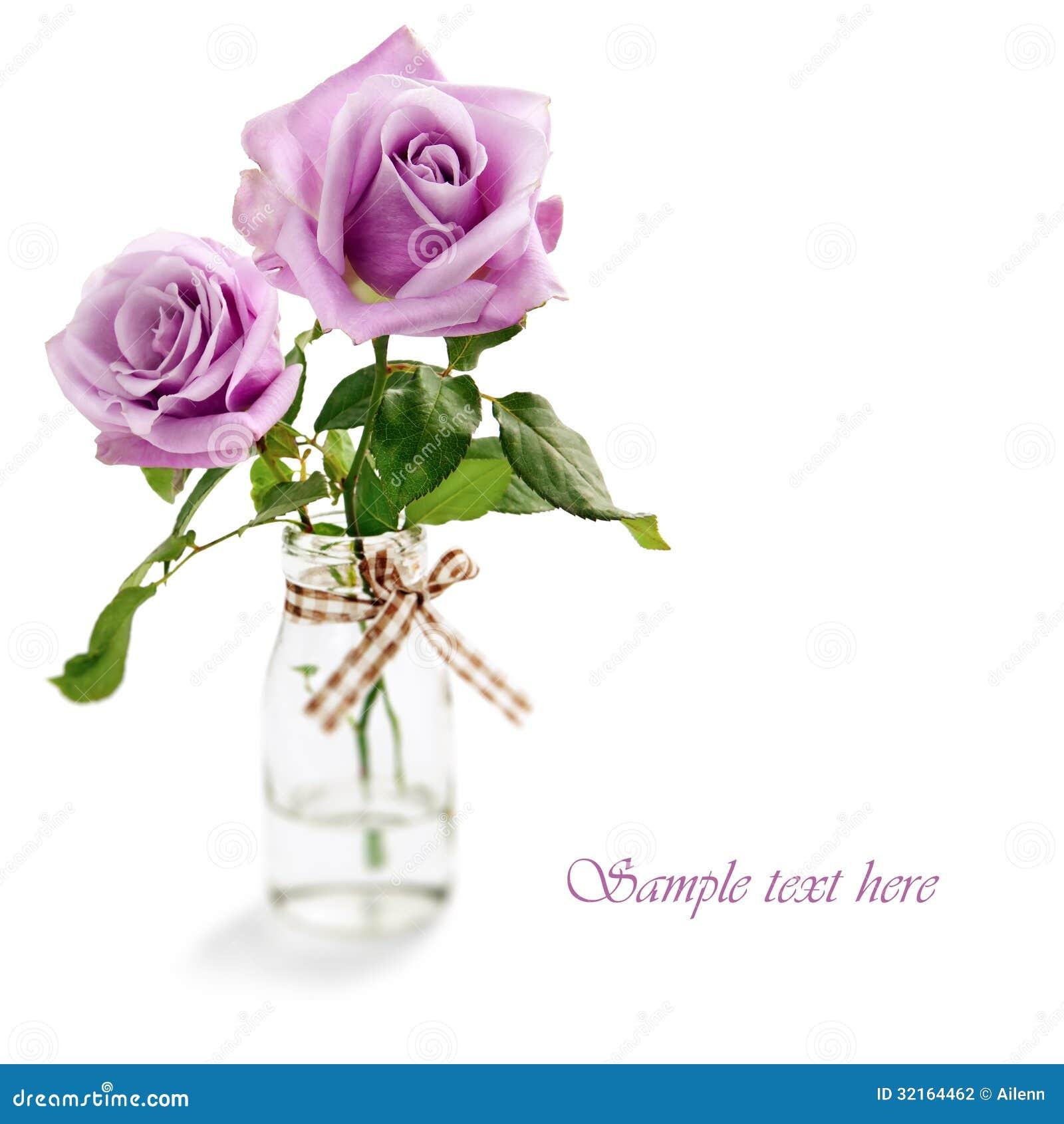 Roses pourpres d isolement sur le fond blanc