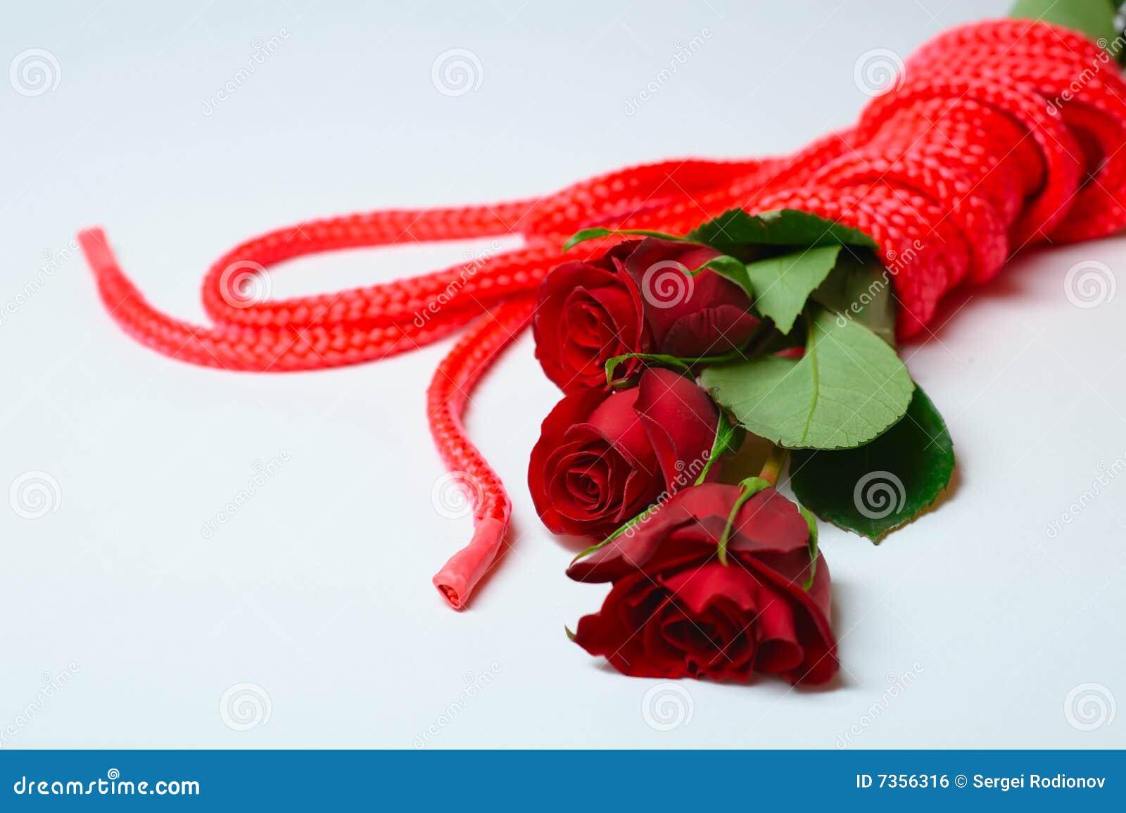 Roses And Ropes Stock Photo Image Of Bondage Rose Close