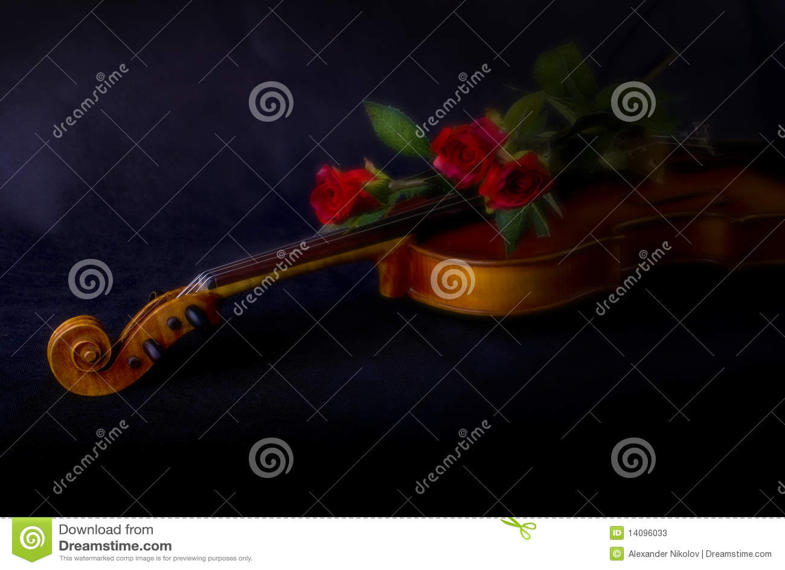Roses Rouges Sur Le Violon Image Stock Image Du Rosa 14096033