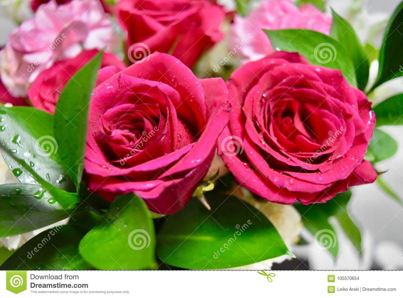 Flowers Two Colors Red And White Roses Stock Photo - Image of white ...