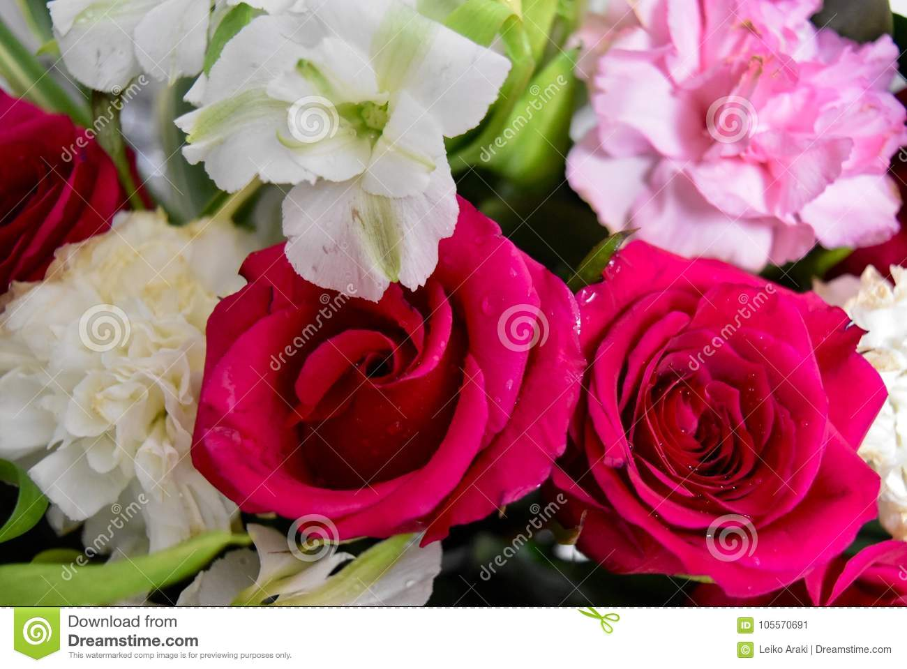Flowers Two Colors Red And White Roses Stock Image - Image of ...