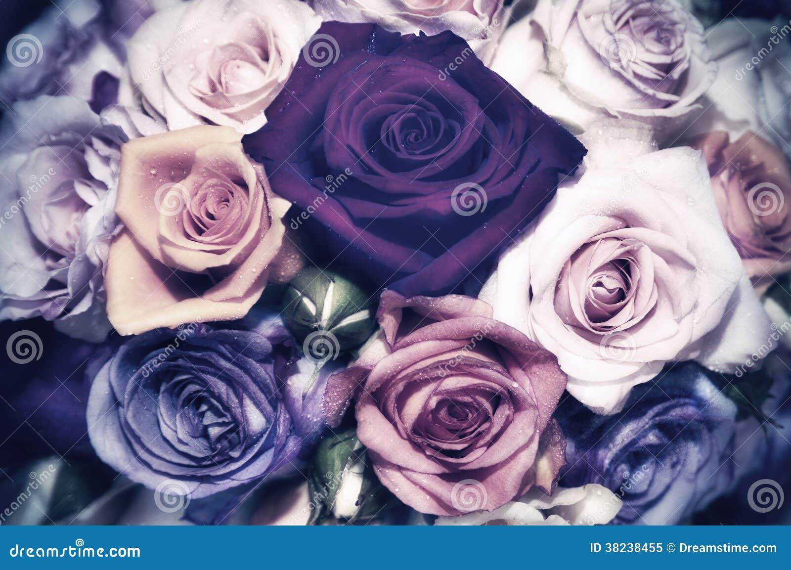 Roses - vintage look