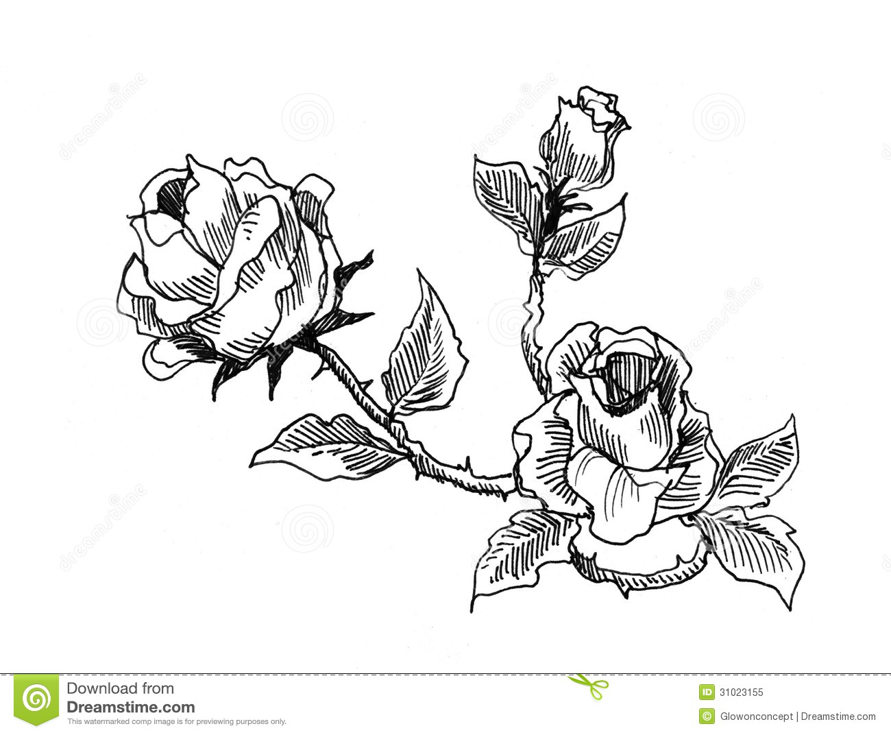Roses Vintage Style Drawing Stock Illustration Illustration Of