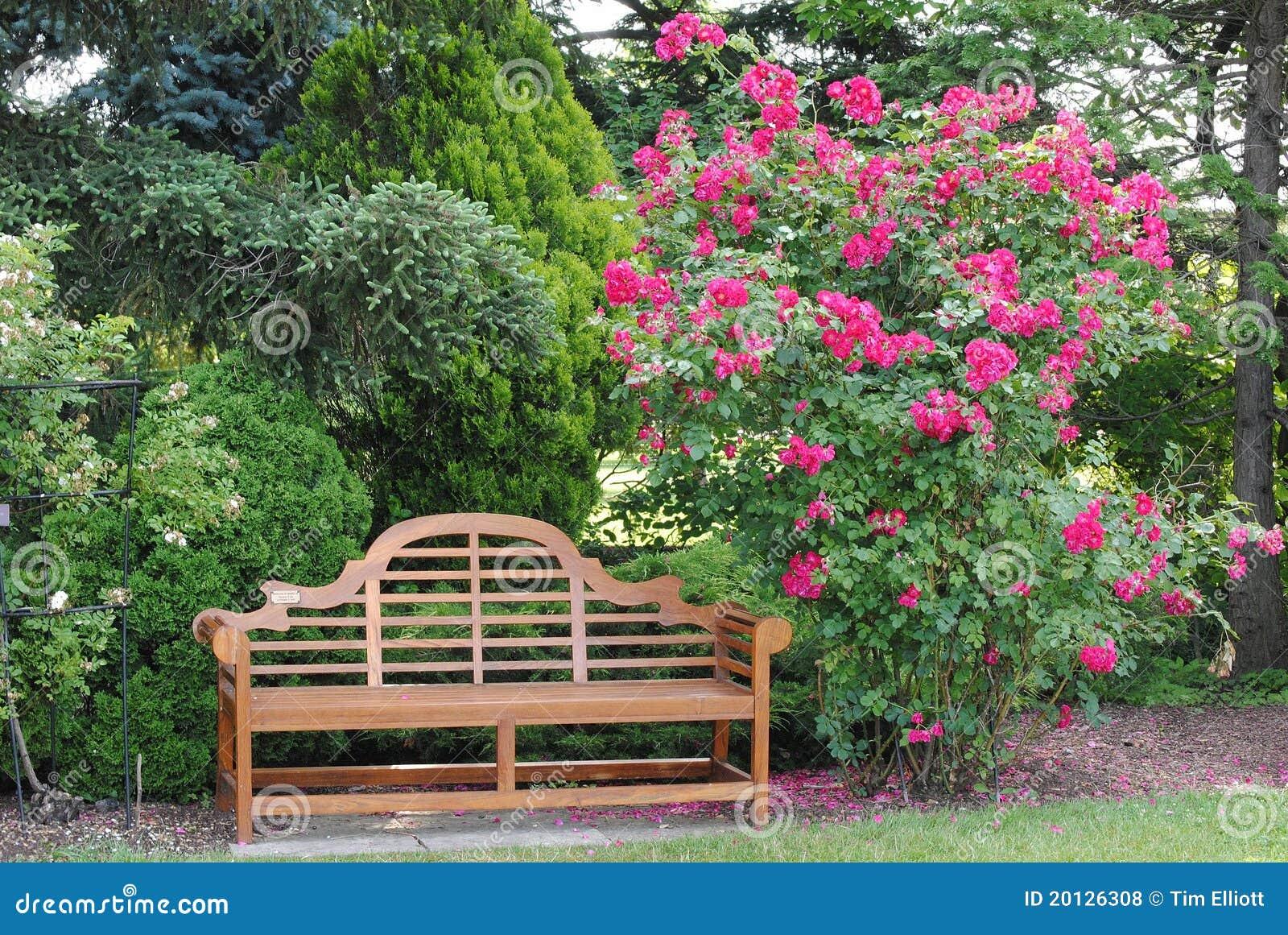 Rosier et un banc de jardin photos libres de droits - Banc de jardin rouge ...