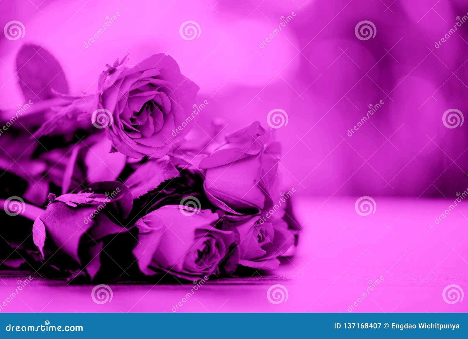 Rosor blommar rosa färger för bukettfilterfärg steg valentindagen på tabellnaturbakgrund för vänbegrepp
