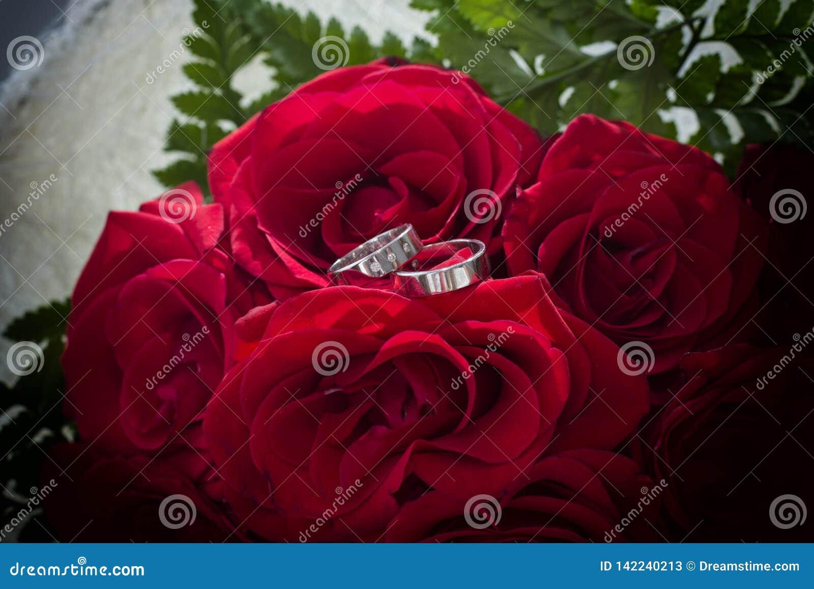 Rosor som är förälskade med cirklar