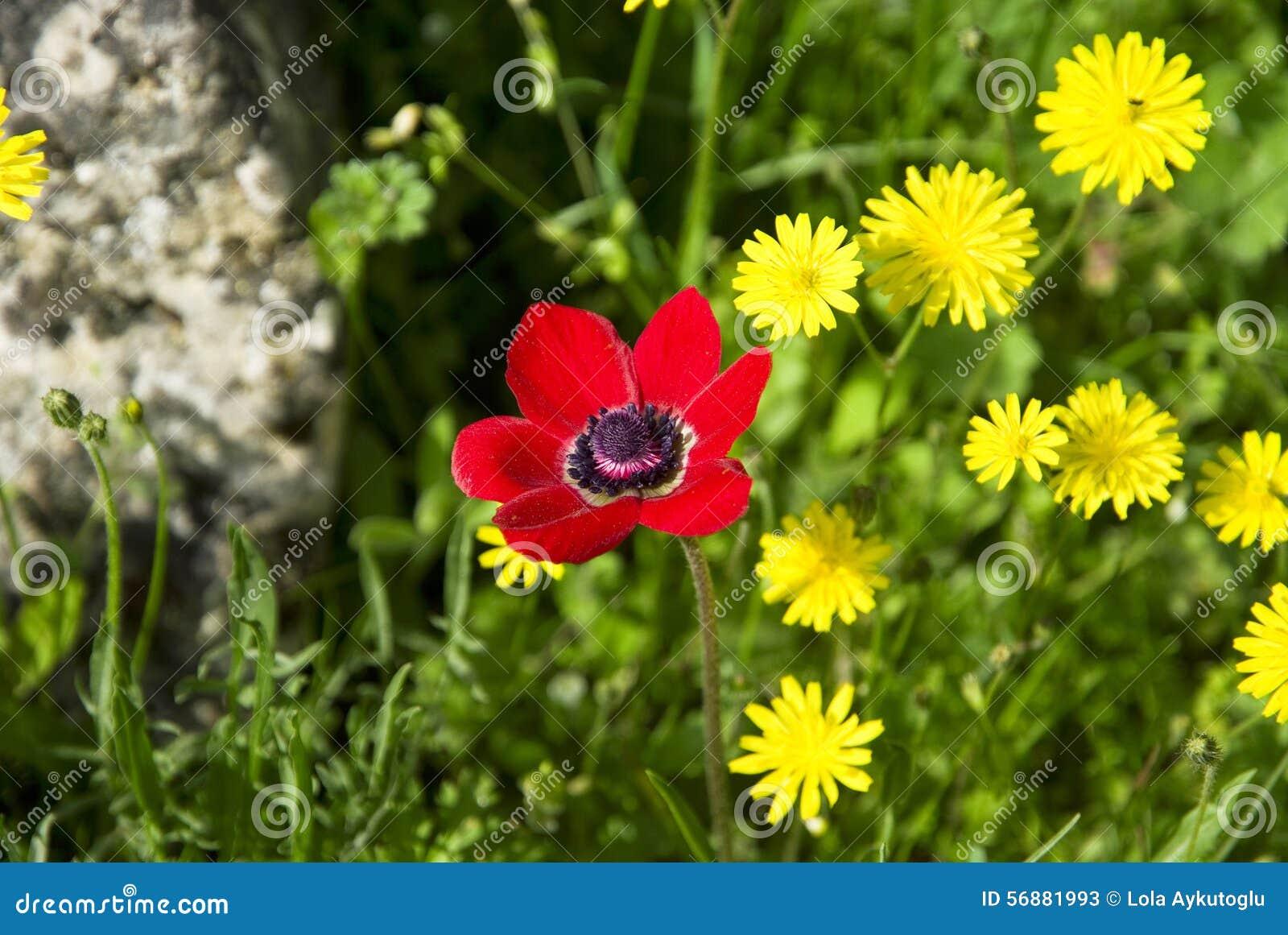 Rosso con i fiori gialli