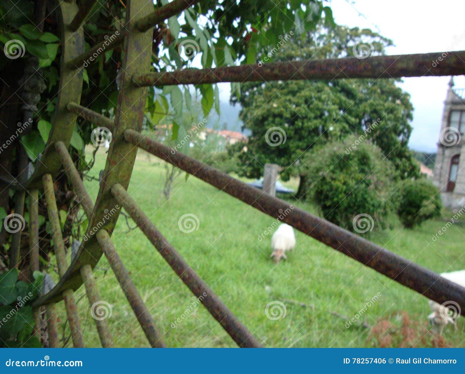 Rostiger Zaun Stockfoto Bild Von Asturias Lamm Rostig 78257406