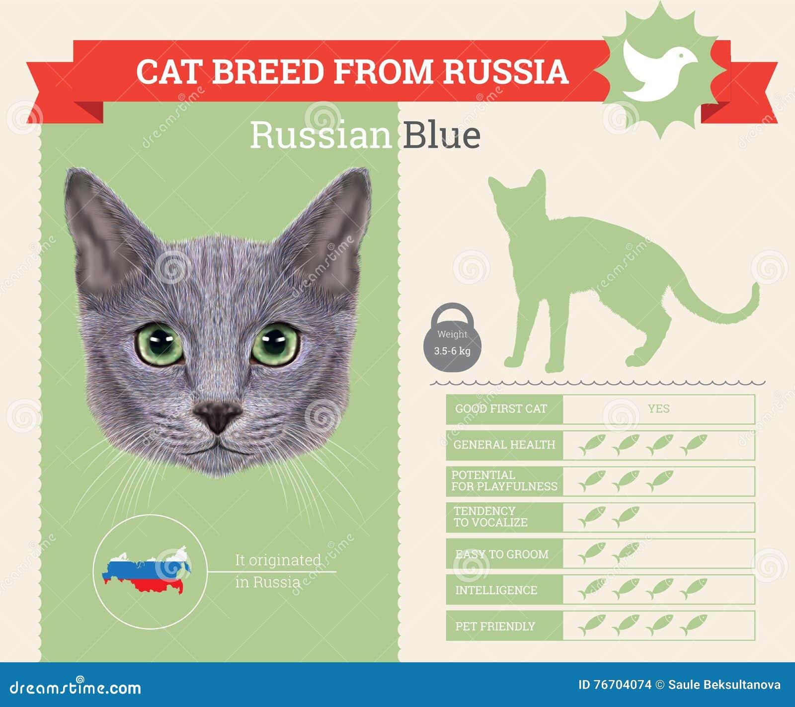 Rosyjski Błękitnego kota trakenu infographics