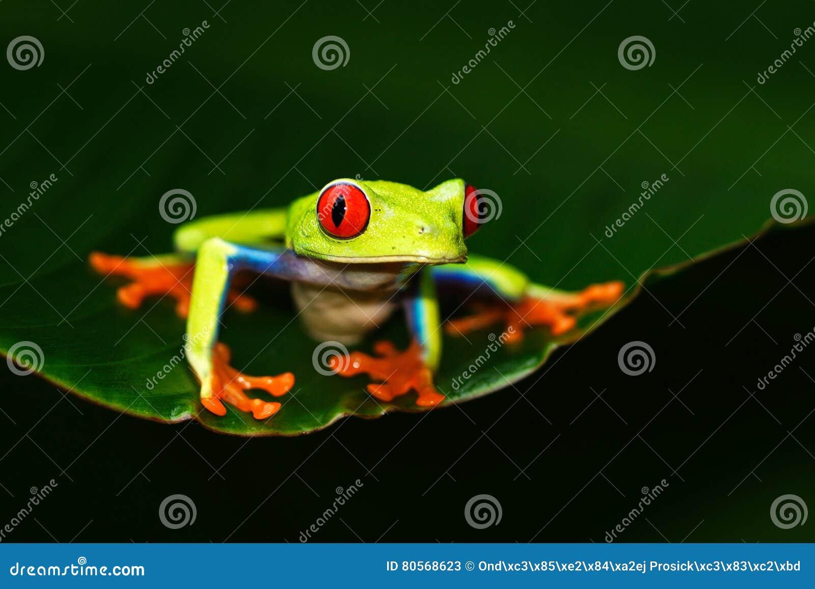 Wunderbar Frosch Auge Anatomie Ideen - Menschliche Anatomie Bilder ...