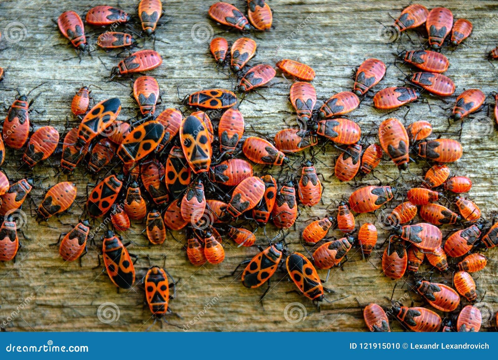 Rot hört die Kolonie ab, die auf dem Bretterzaun während des Sommertages gelegen ist