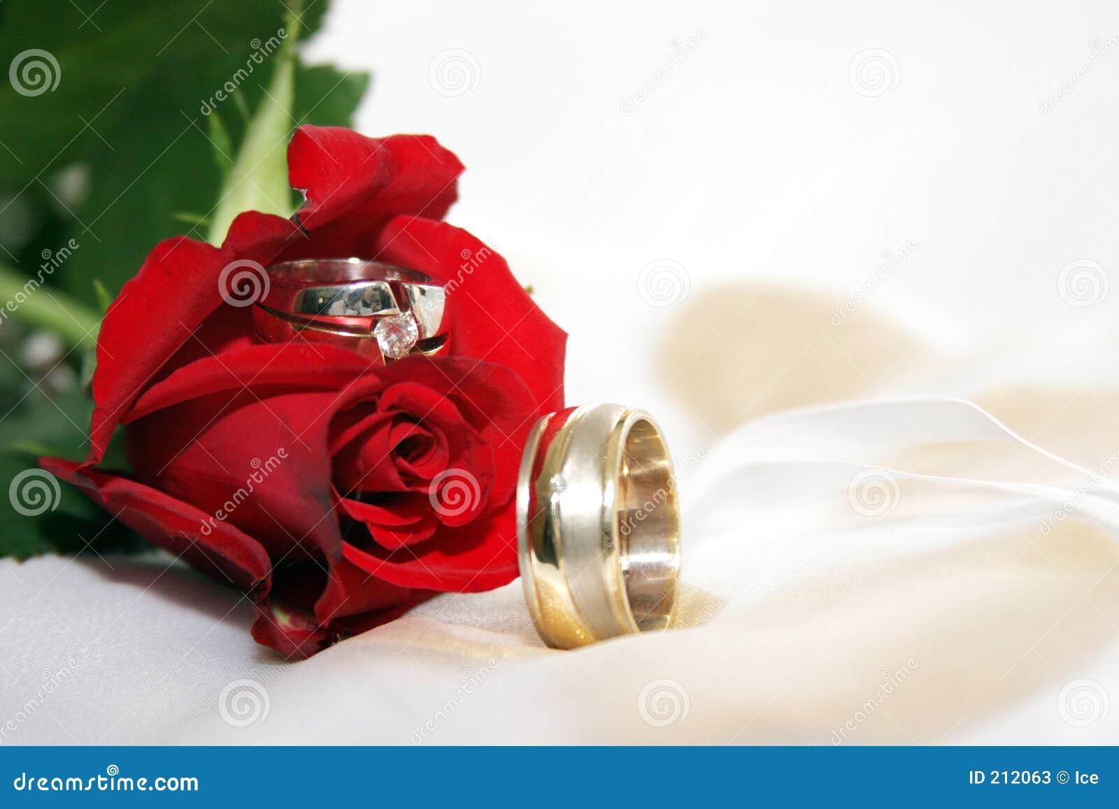 Rot Stieg Mit Hochzeitsringen Stockbild Bild Von Kunst Blume 212063