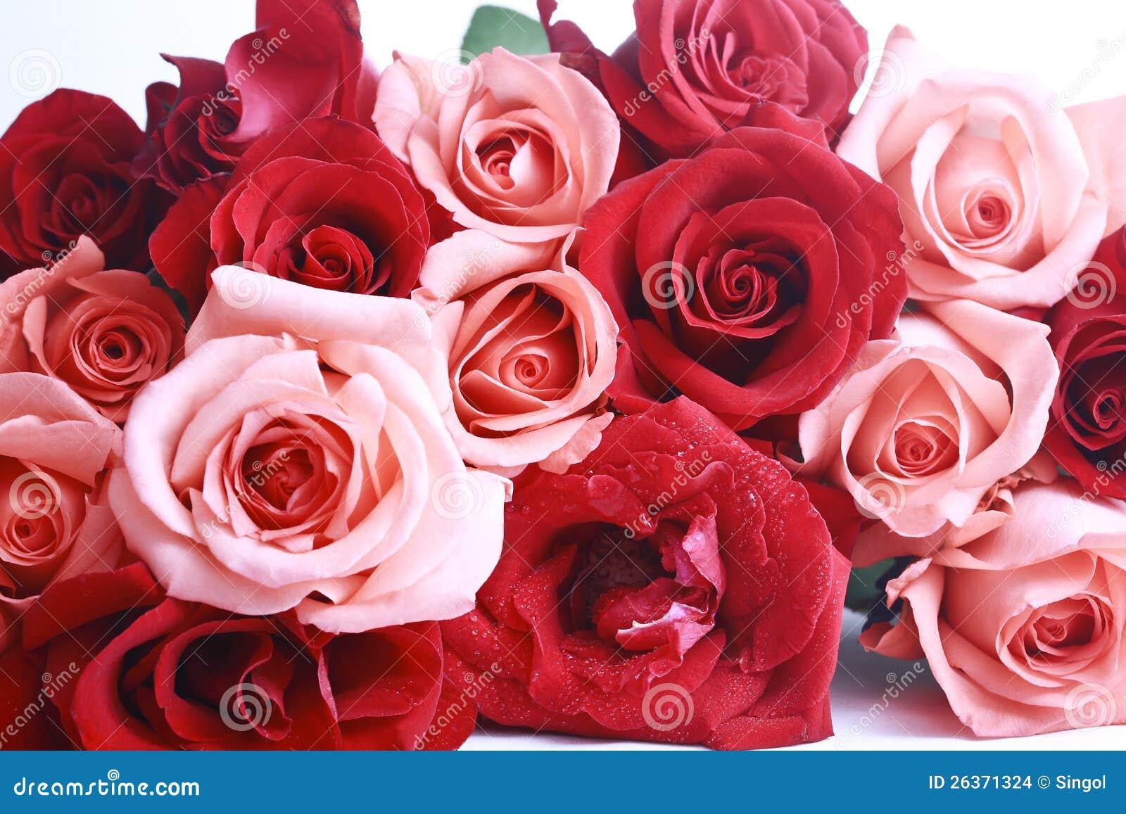Rot und Rosa stiegen