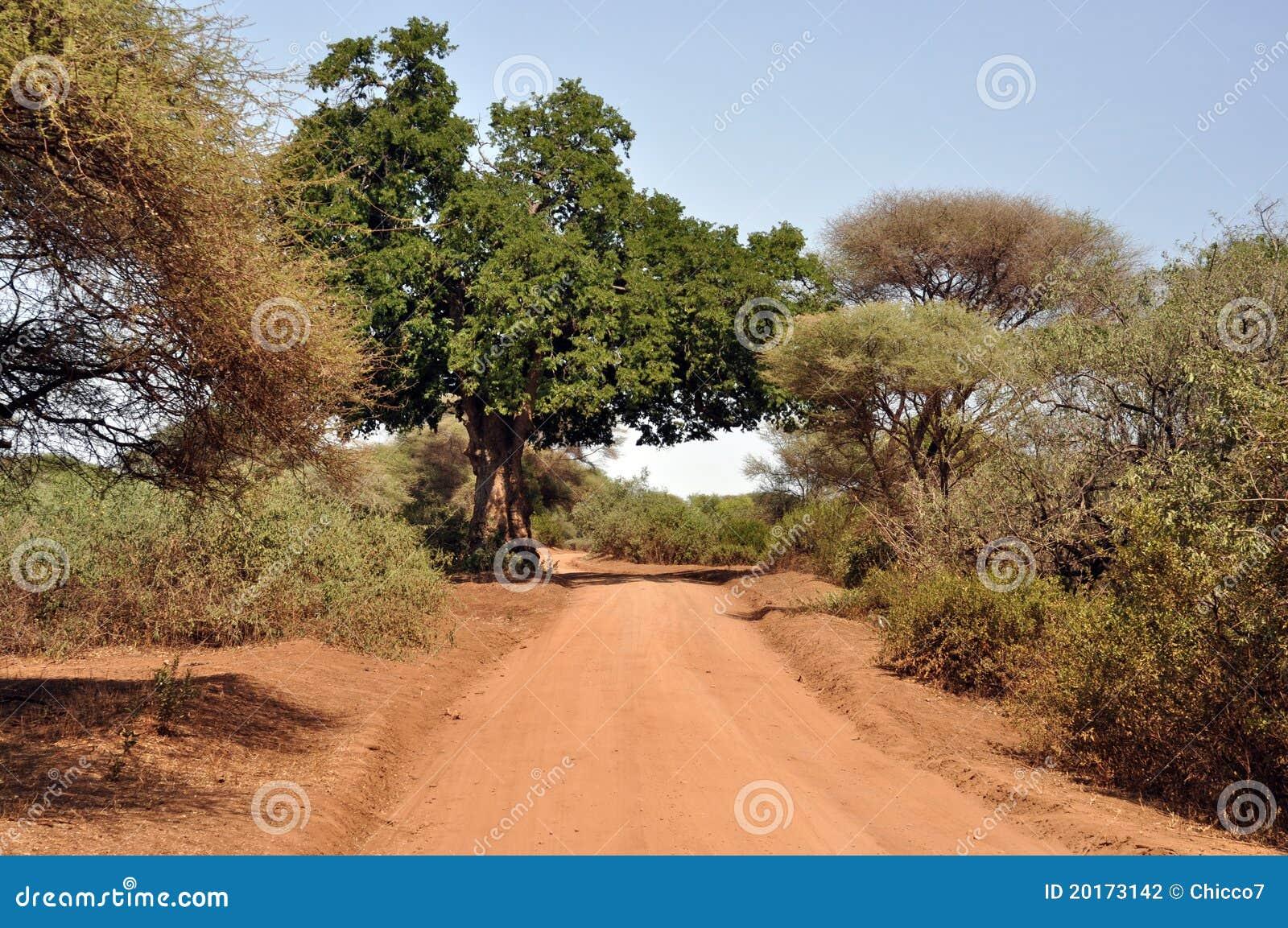 Rota do safari