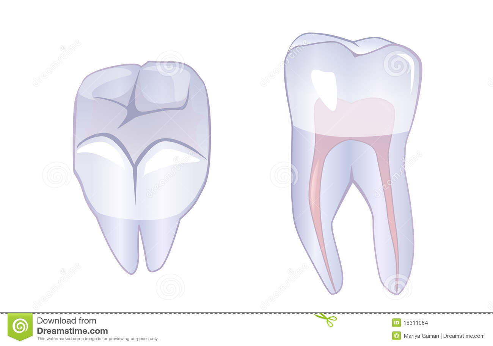 Rota tanden