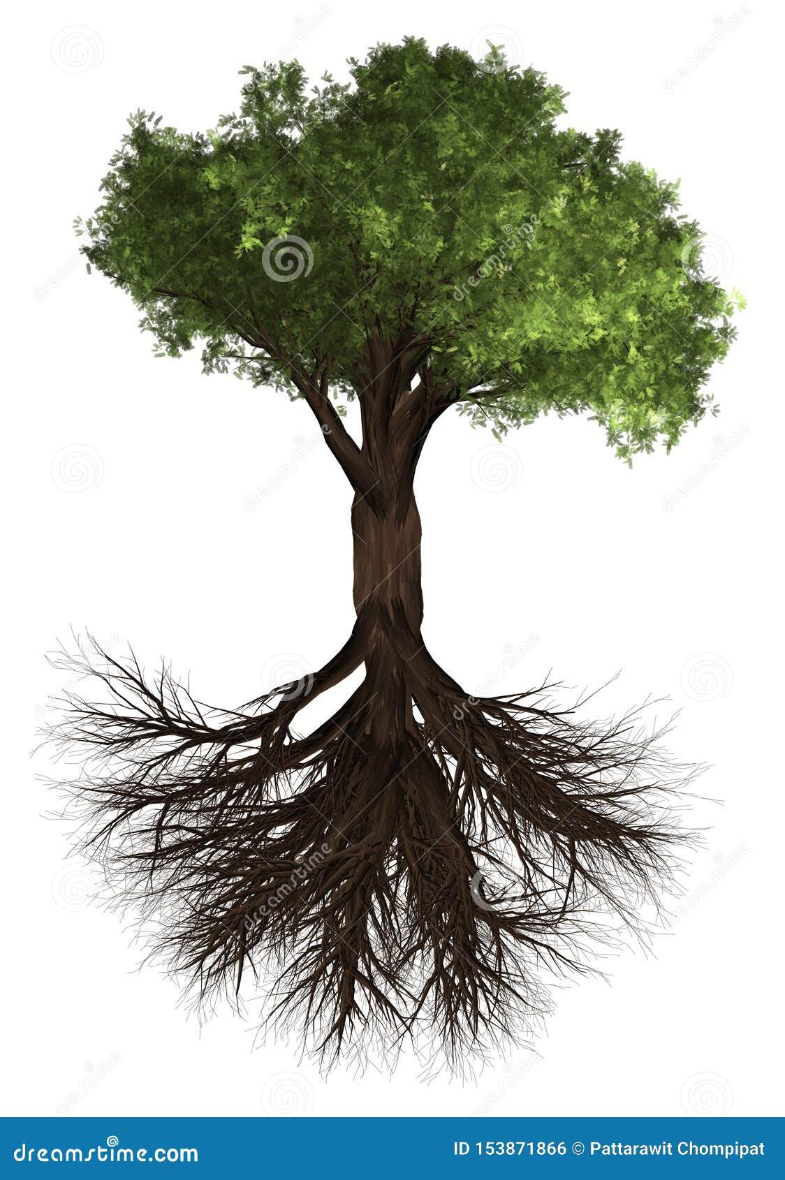 Rota treen Grön Forrest trädbakgrund illustration 3d Vit bakgrundsisolat