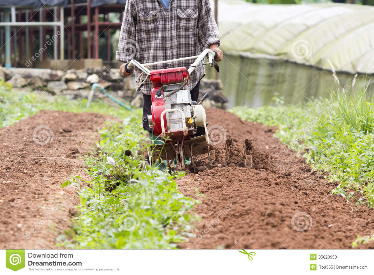Rotary cultivator working in garden