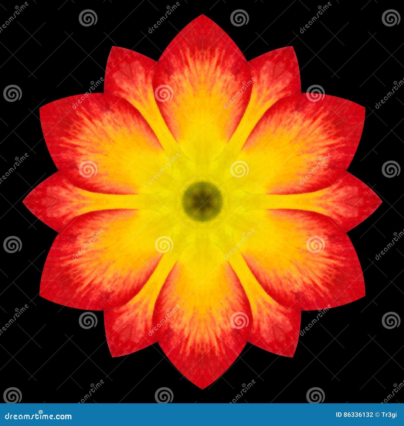 Rote Blume Mandala Kaleidoscope Isolated auf Schwarzem
