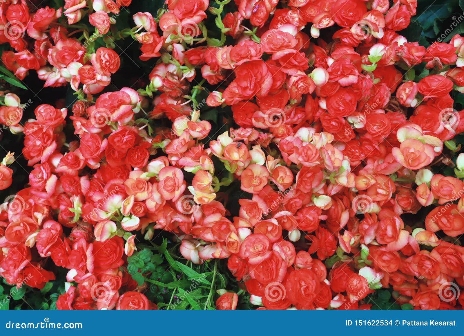 Rote Blume und Fliege
