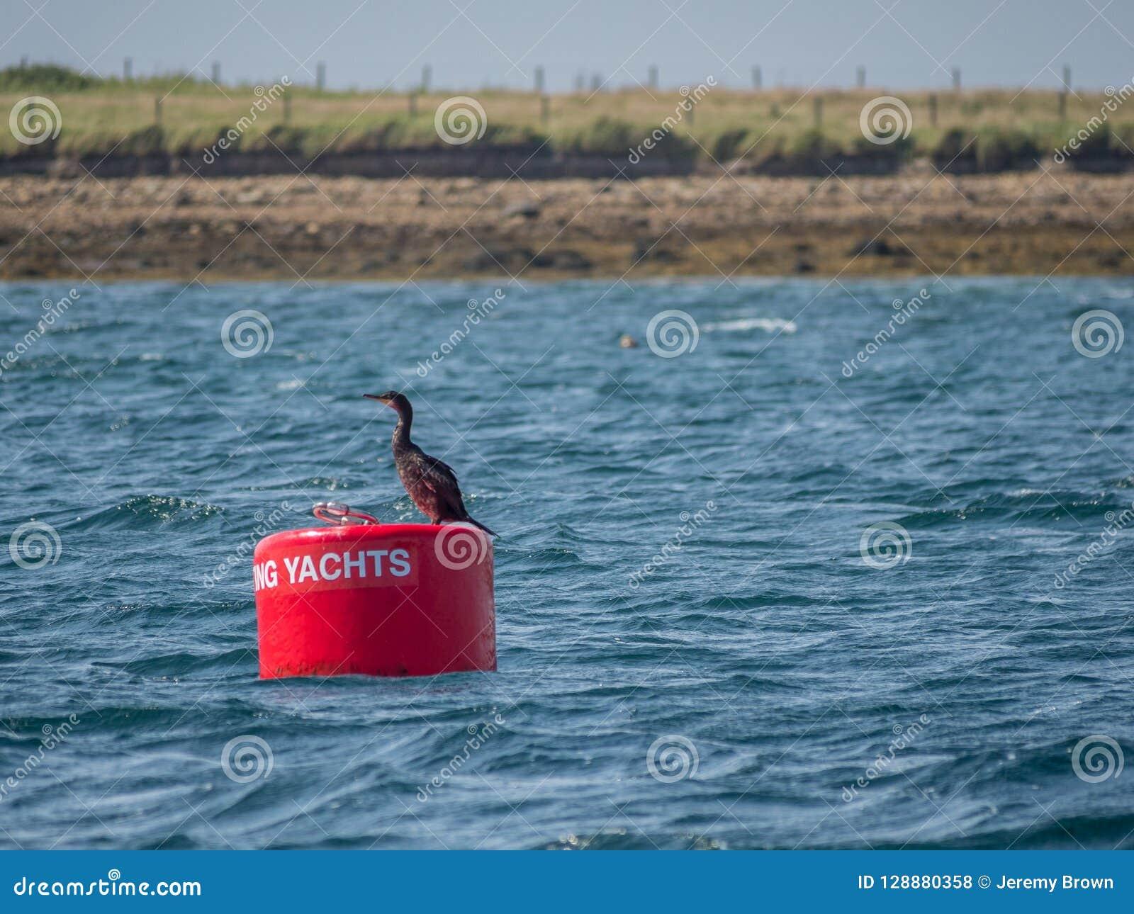 Rote Boje für Yachten Scapa-Fluss, Orkney