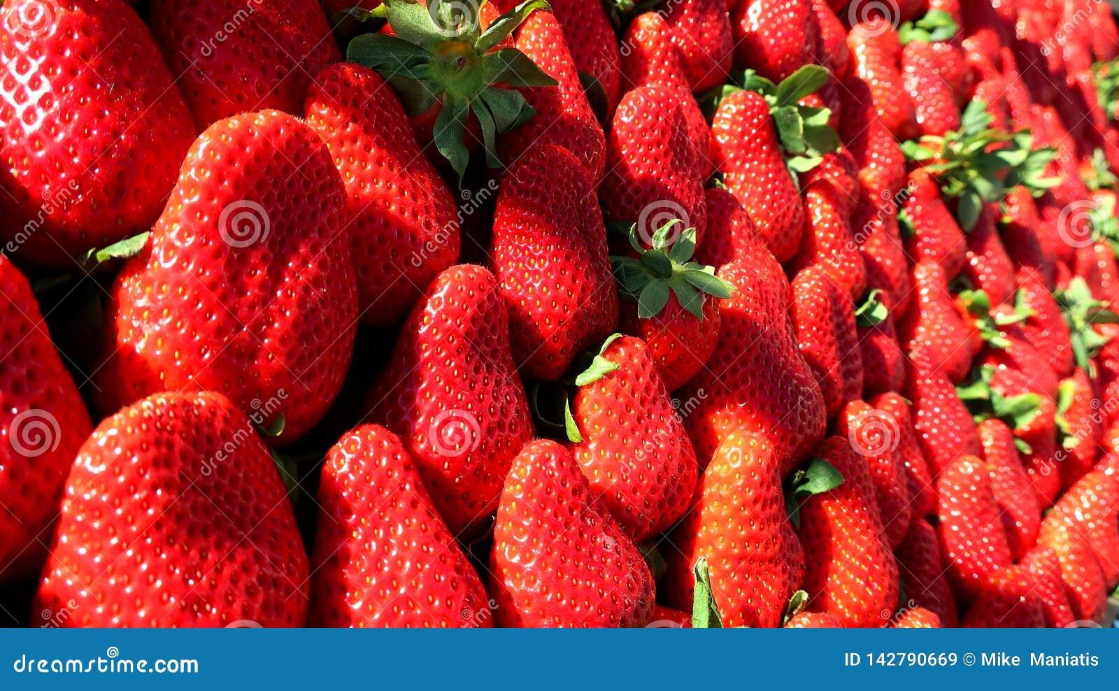 Rote frische Erdbeere vom Frühling