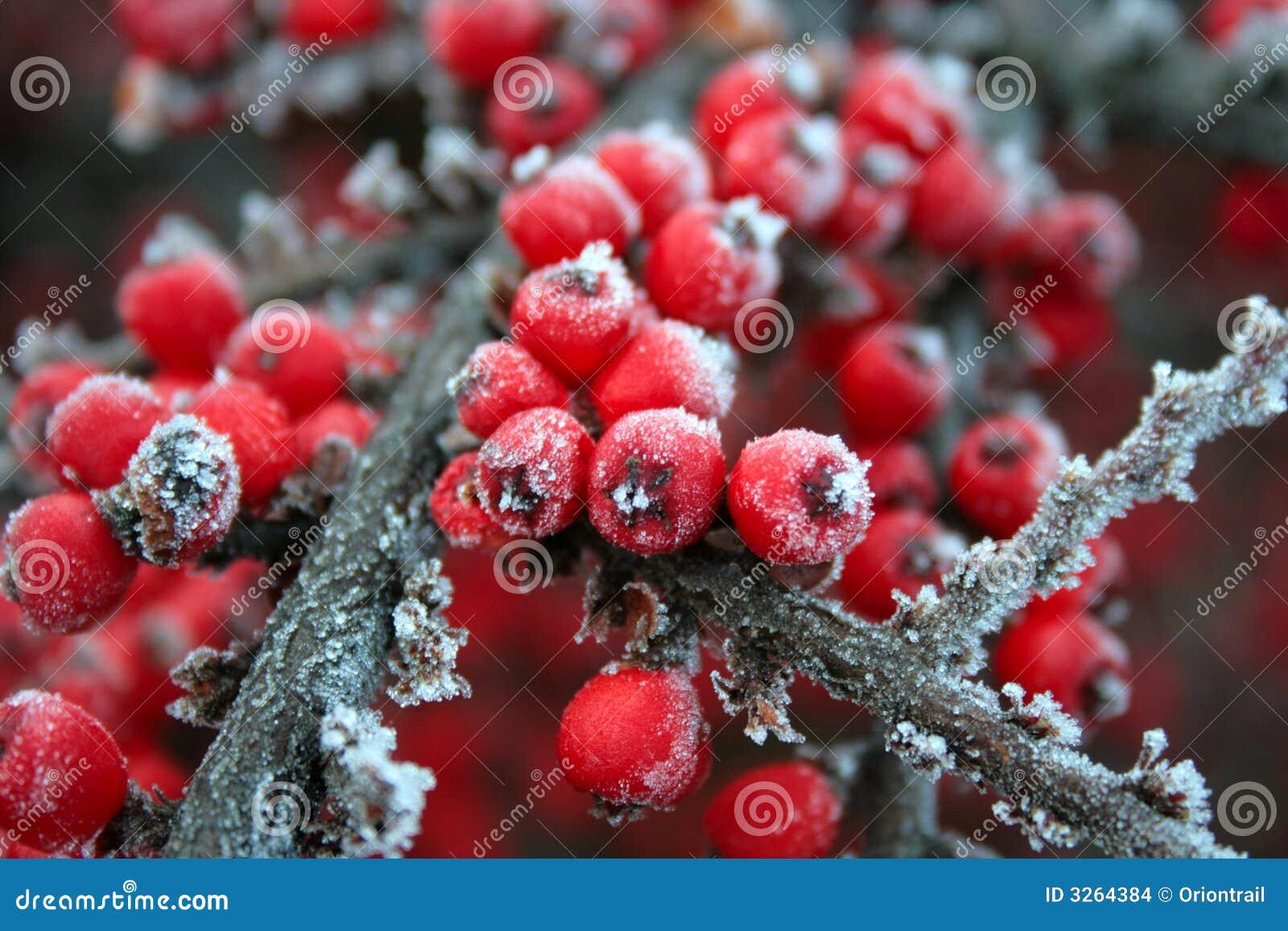rote gefrorene beeren stockbilder bild 3264384. Black Bedroom Furniture Sets. Home Design Ideas