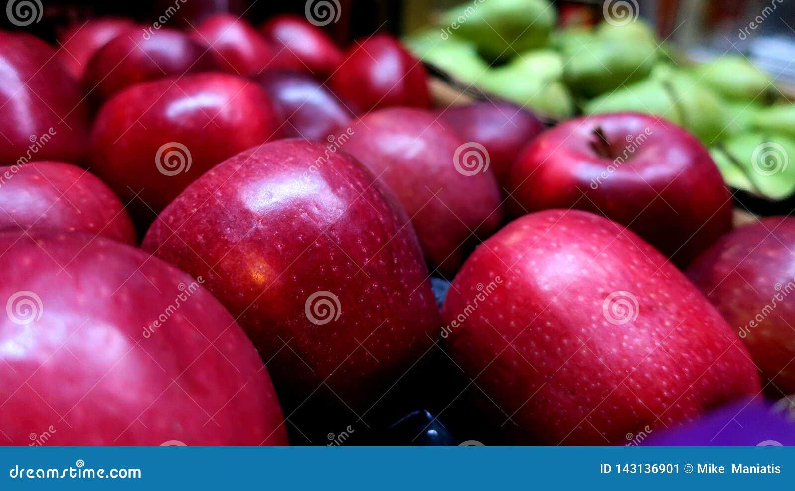 Rote große frische Äpfel ernten