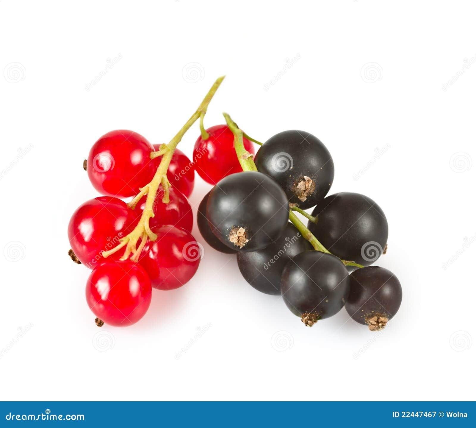 rote johannisbeeren und schwarze johannisbeeren stockbild bild von saftig organisch 22447467. Black Bedroom Furniture Sets. Home Design Ideas