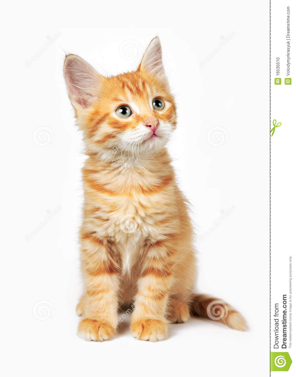 Free Use Of Ginger Cat Images