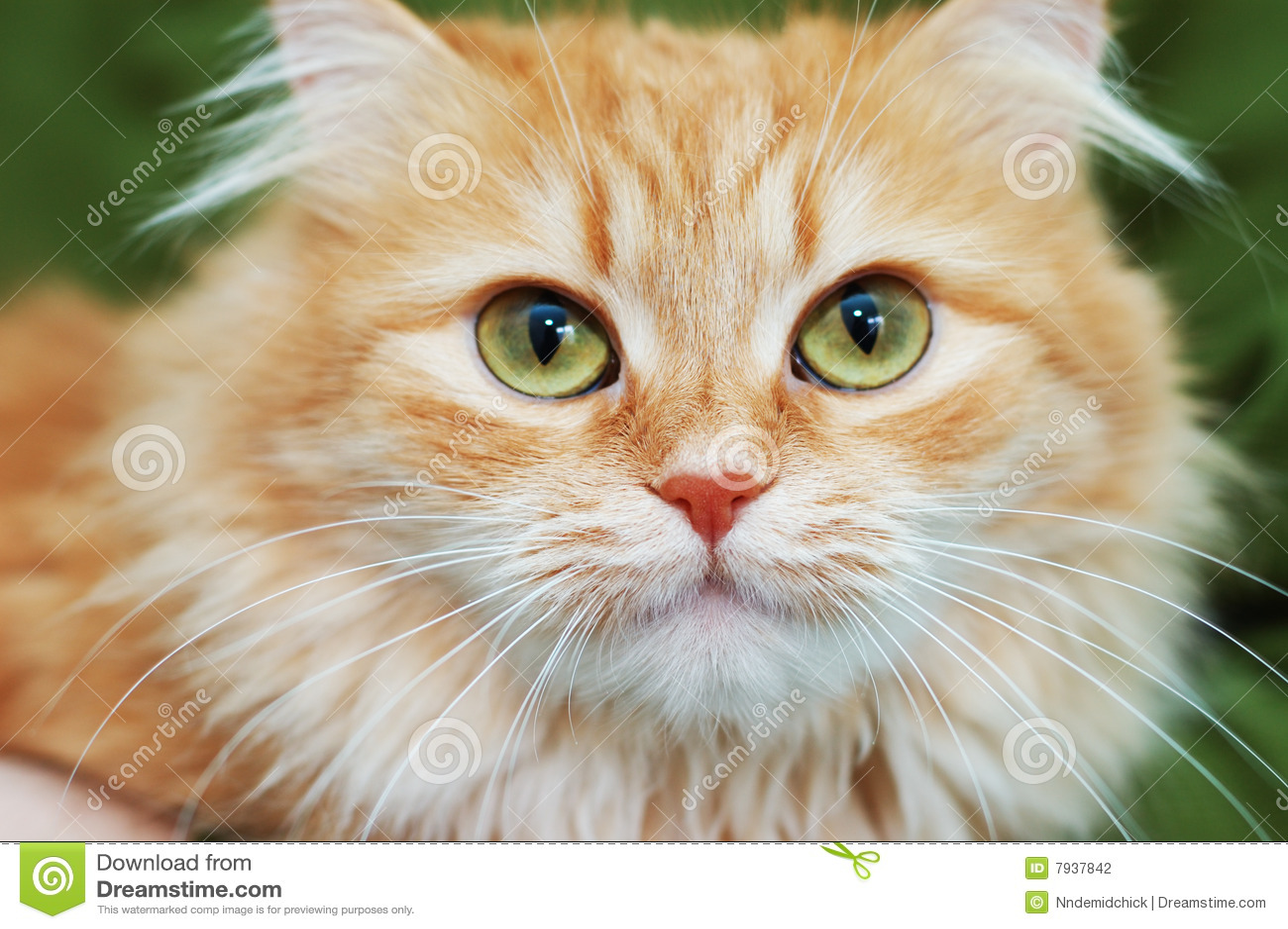 Green Cat Red Eyes