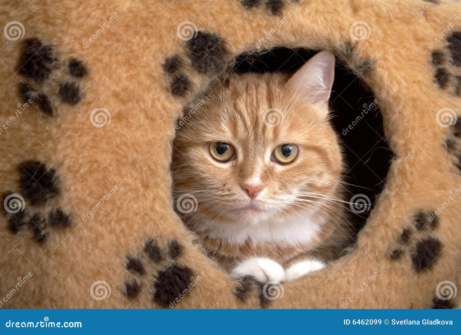 Rote Katze sitzt in einem kleinen Haus
