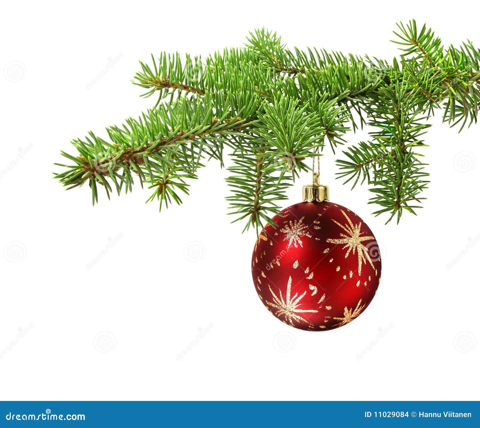 rote kugel auf weihnachtsbaumzweig stockfoto bild von celebrate zweig 11029084. Black Bedroom Furniture Sets. Home Design Ideas