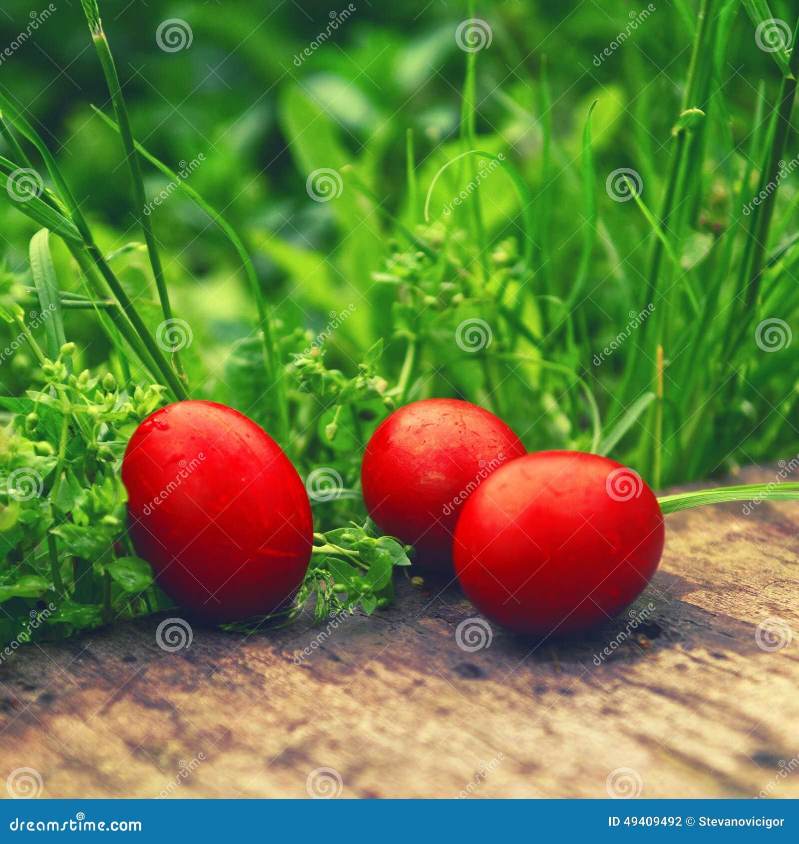 Download Rote Ostereier Im Grünen Gras Stockfoto - Bild von konzept, frühling: 49409492