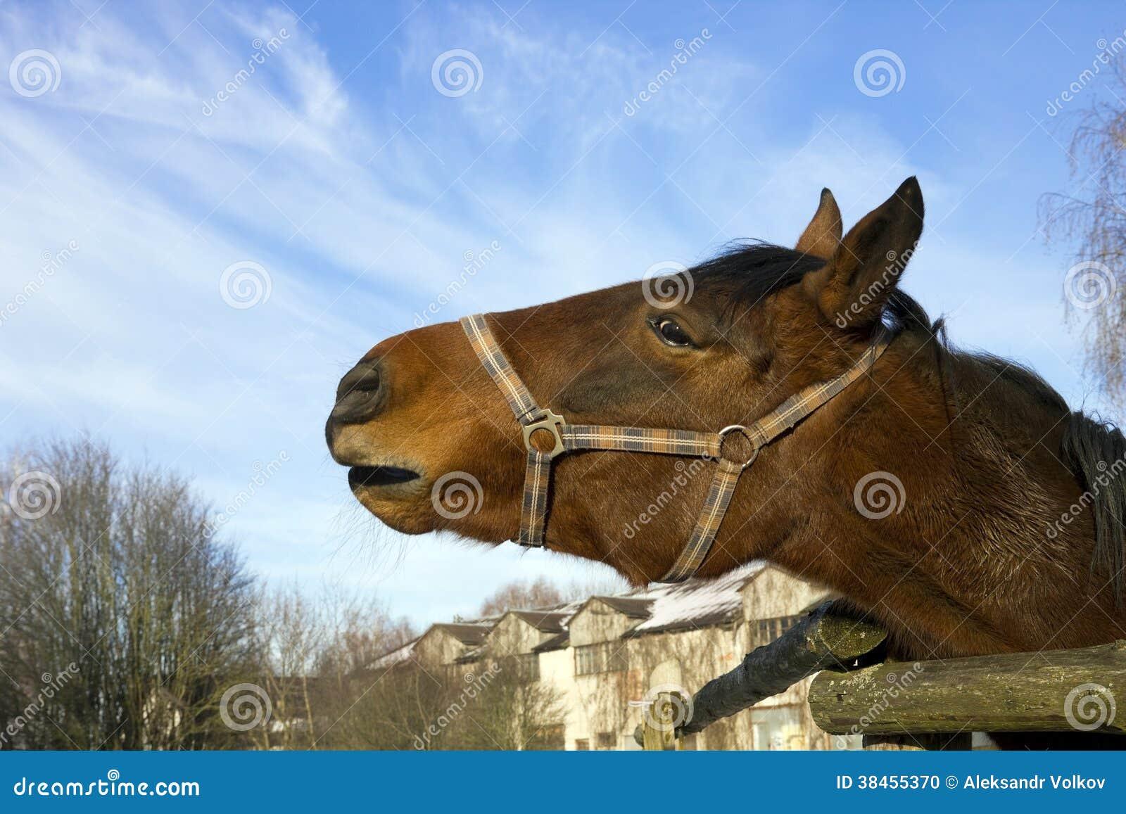pferdewiehern
