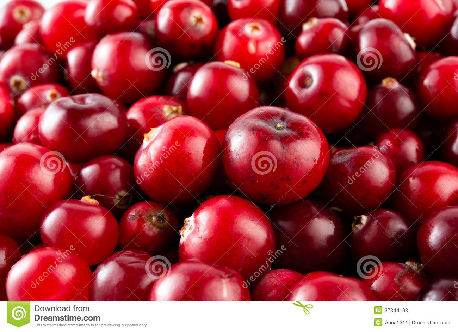 Rote reife Moosbeeren Makro.