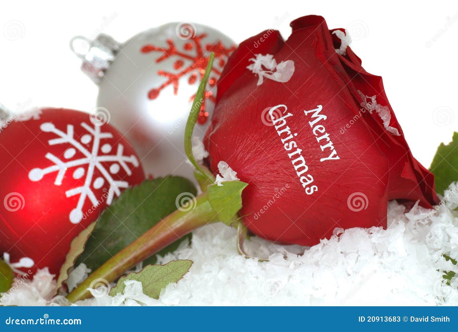 Rote Rose, Die Frohe Weihnachten Auf Ihr Sagt Stockbild - Bild von ...