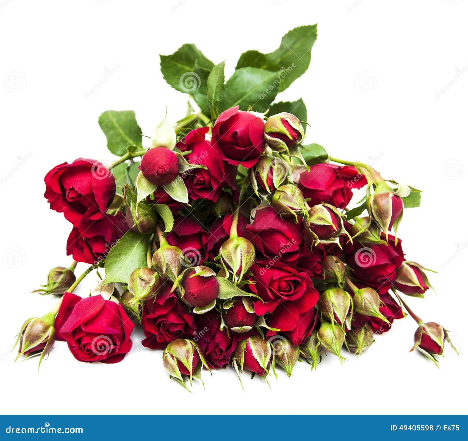 Download Rote Rosen stockfoto. Bild von verbunden, flitterwochen - 49405598
