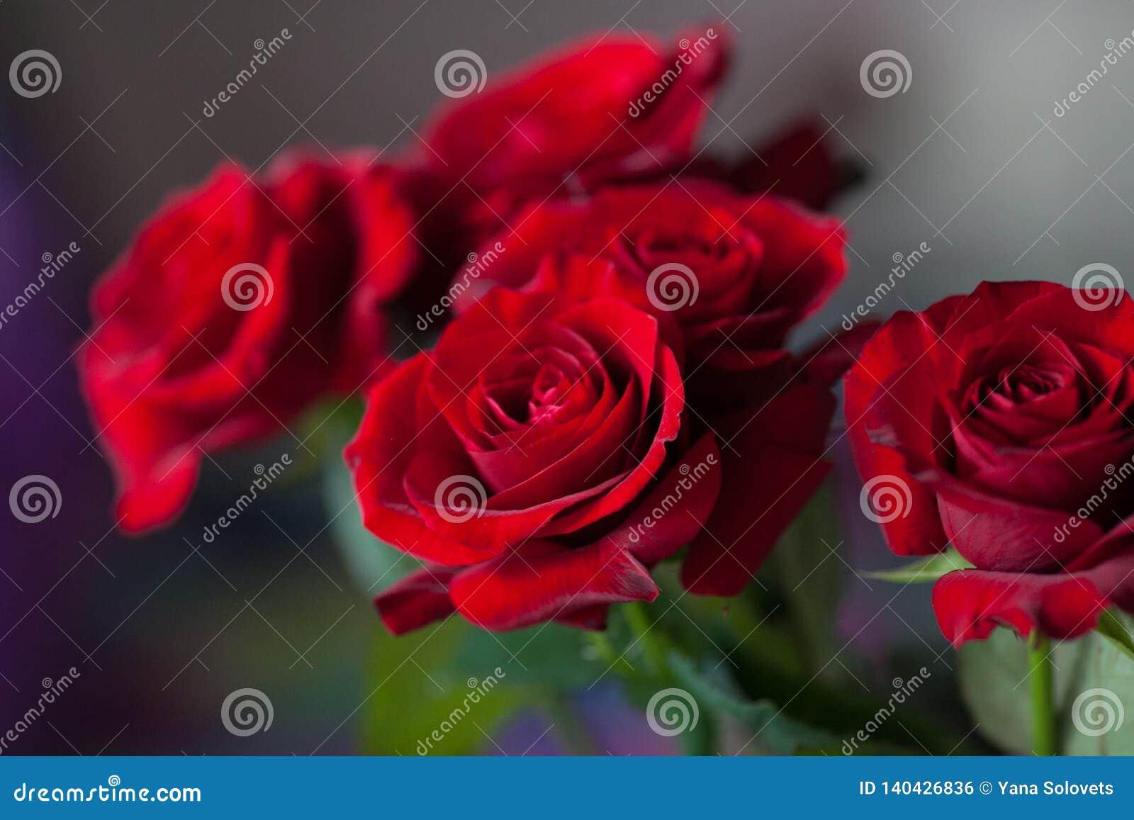 Rote Rosen auf dem unscharfen Hintergrund