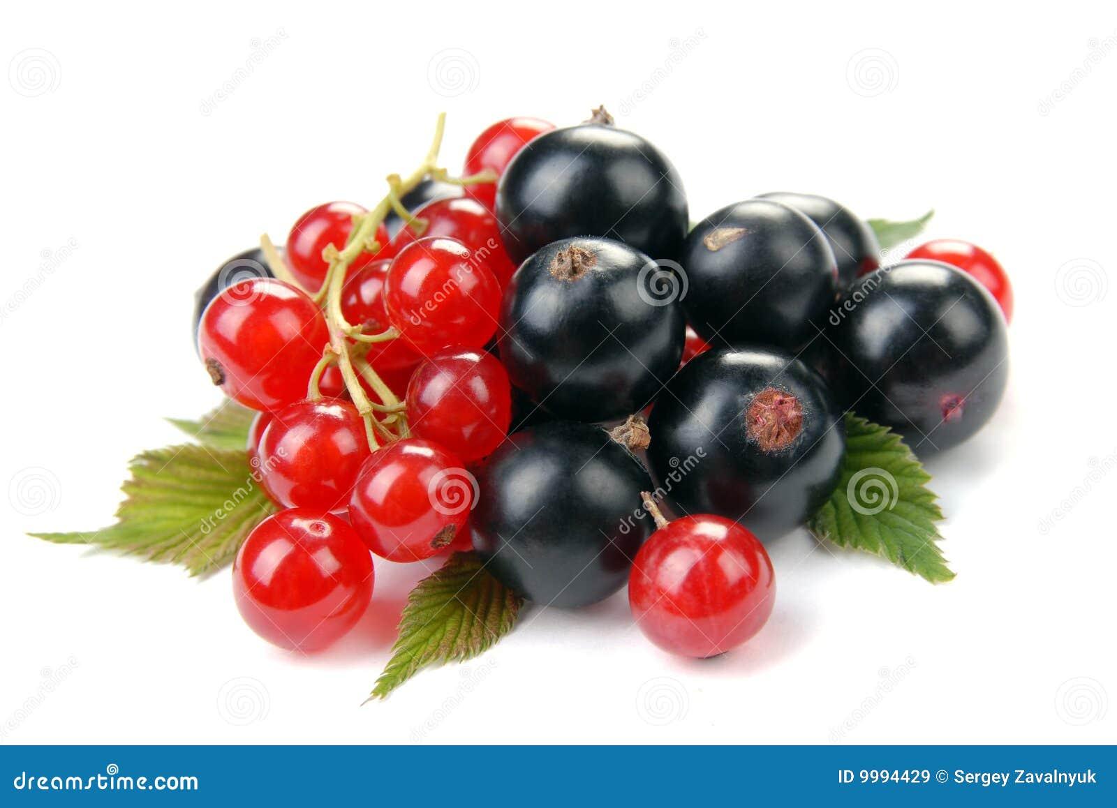 rote und schwarze johannisbeere stockbild bild von. Black Bedroom Furniture Sets. Home Design Ideas