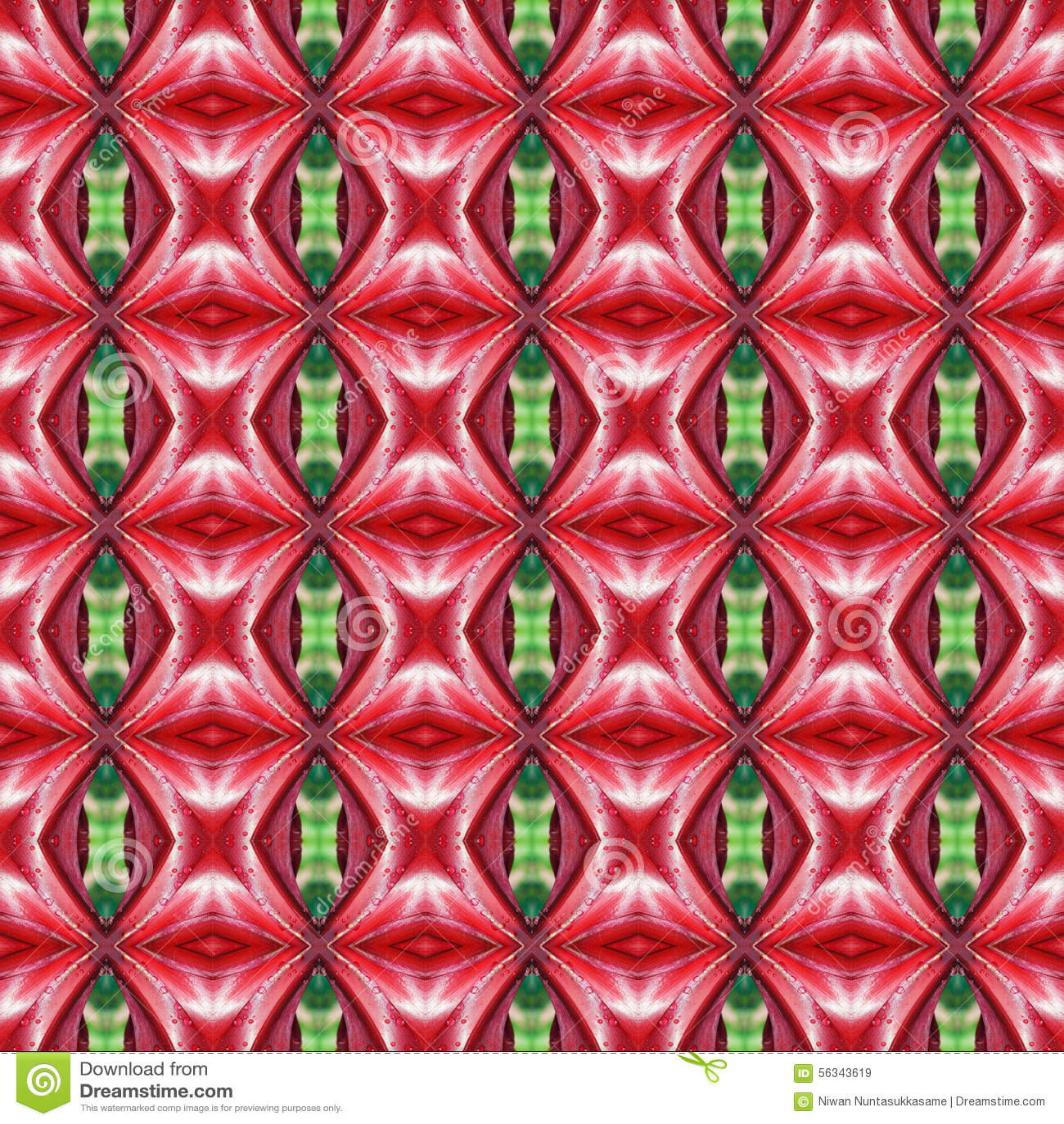 Rote volle Blüte von Hippeastrum blüht seamlesss
