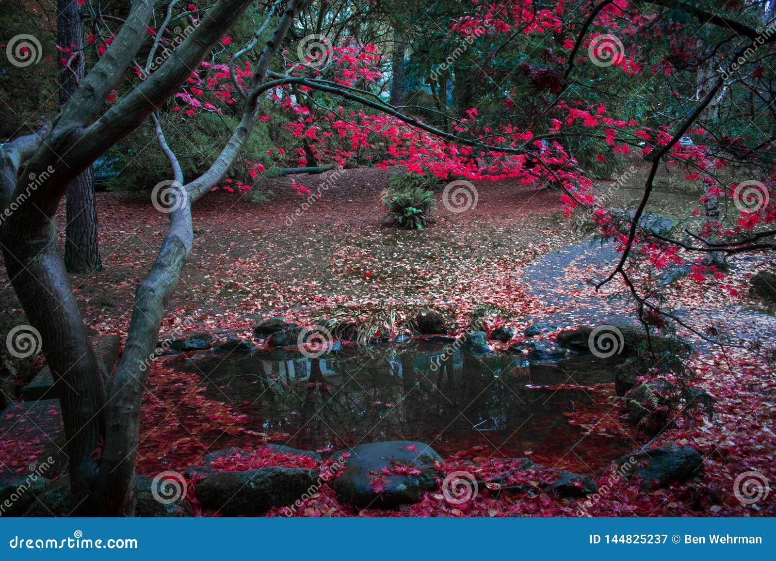 Roter Autumn Leaves durch den Teich