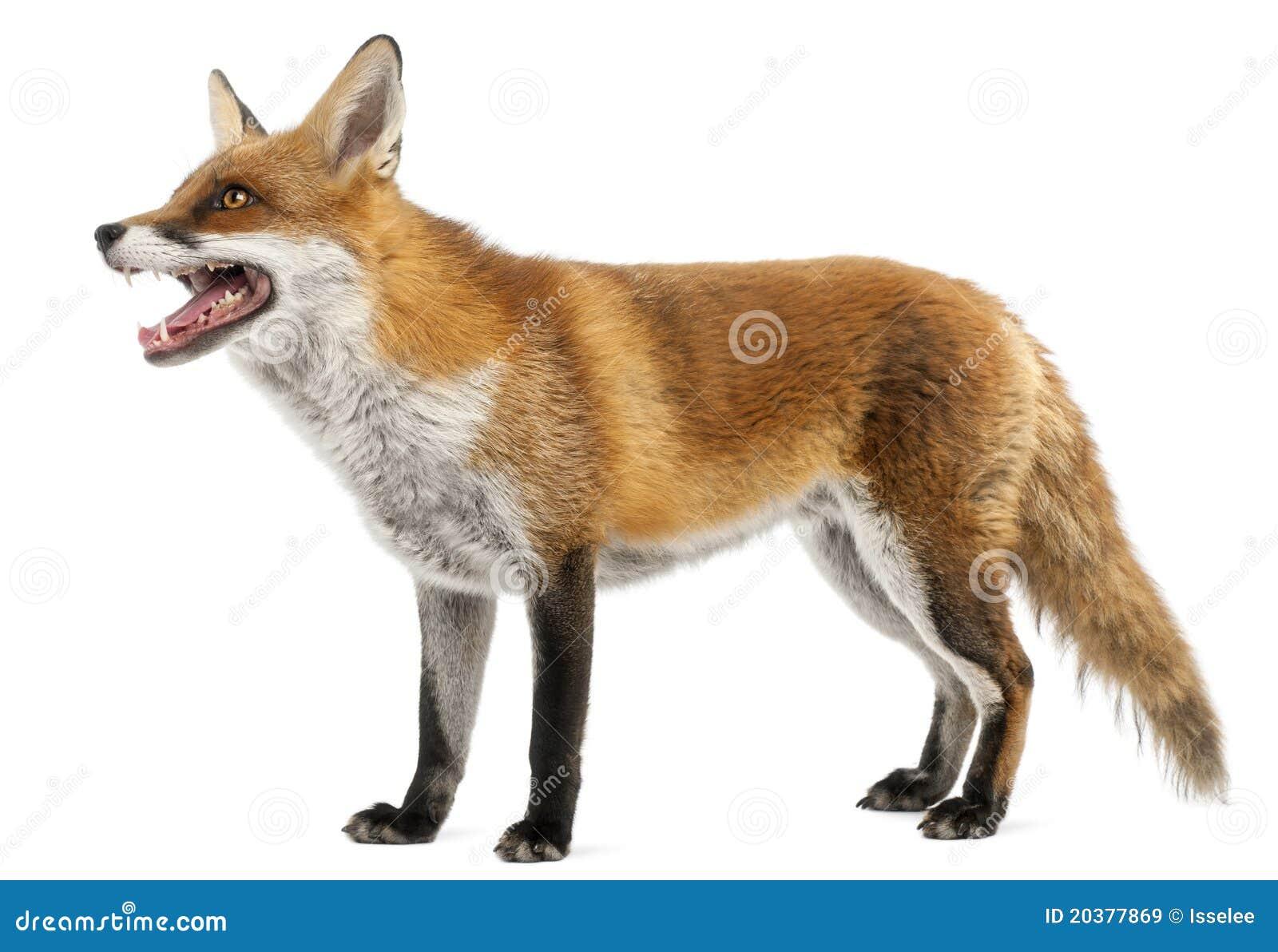 Fox Kostenlos Schauen