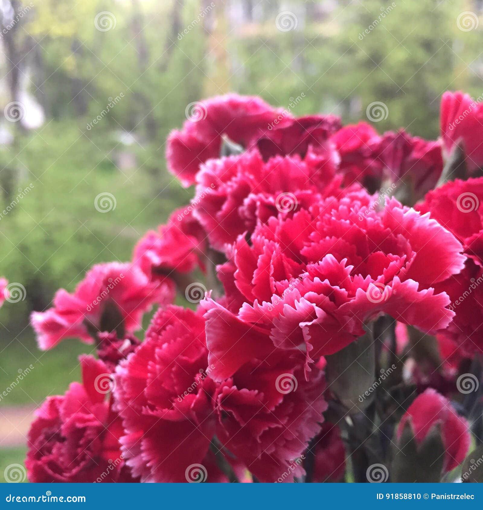 Roter Gartennelkeblumenstrauß