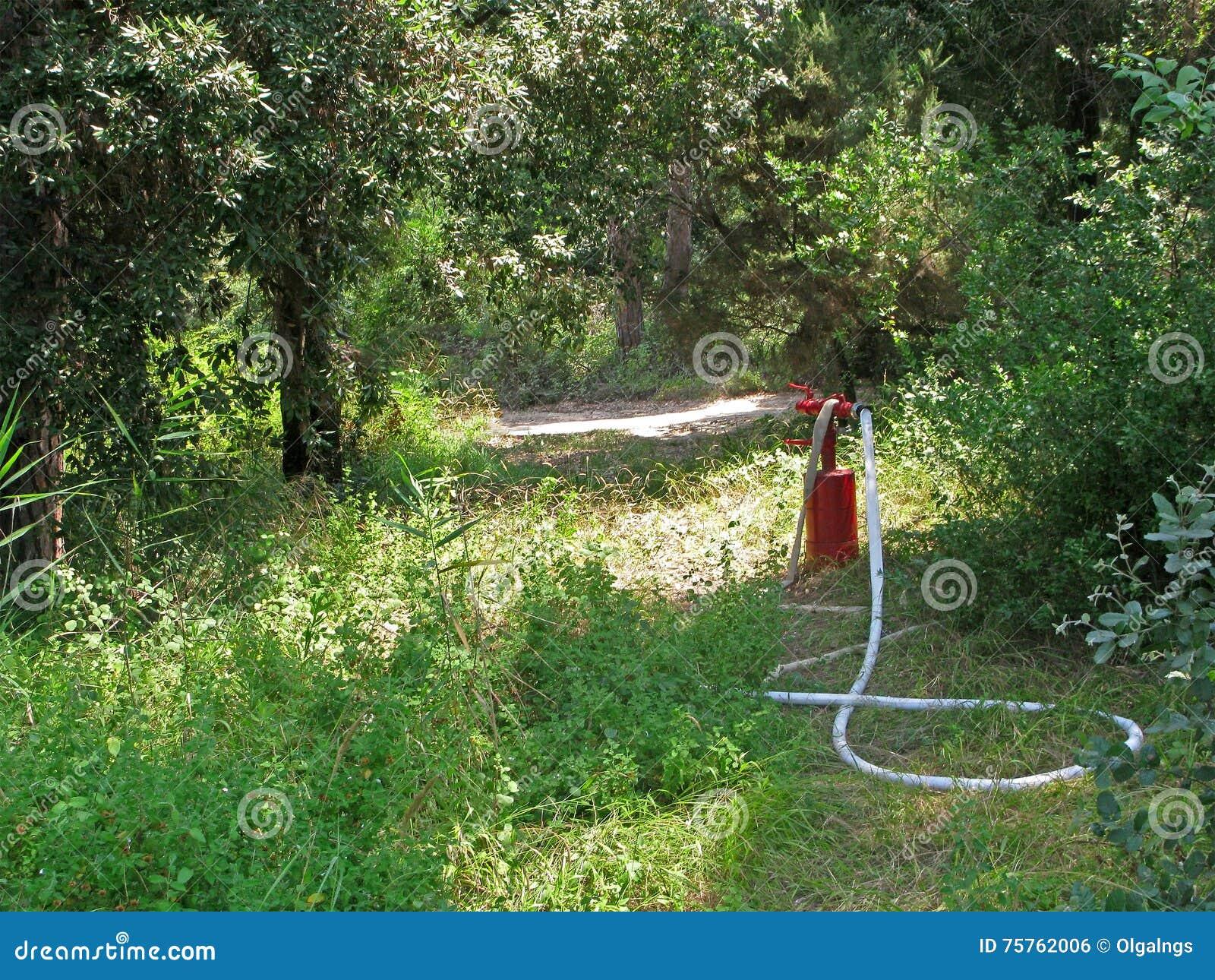 Roter Hydrant mit Feuerlöschschlauch