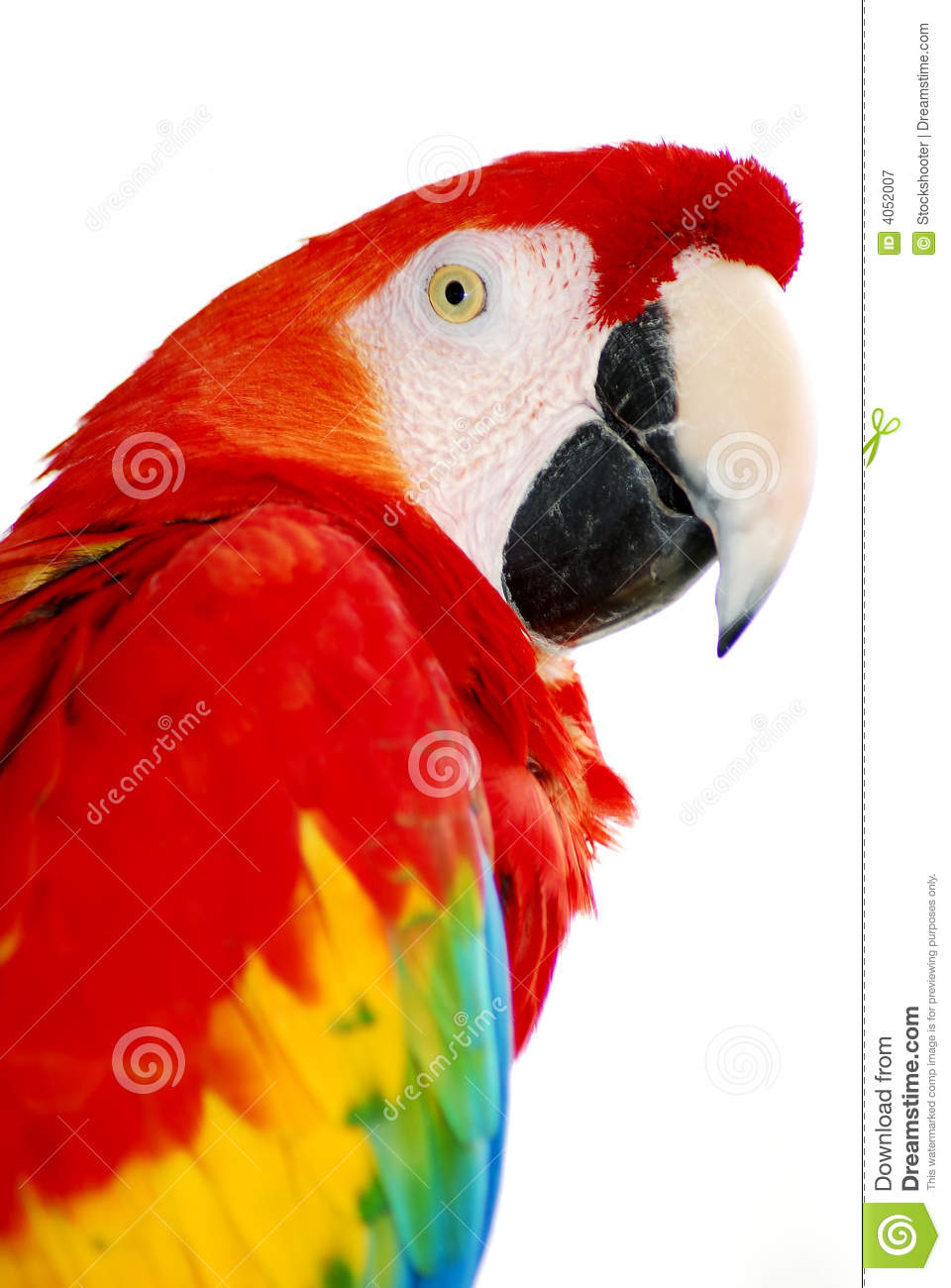 Roter Macaw Vogel