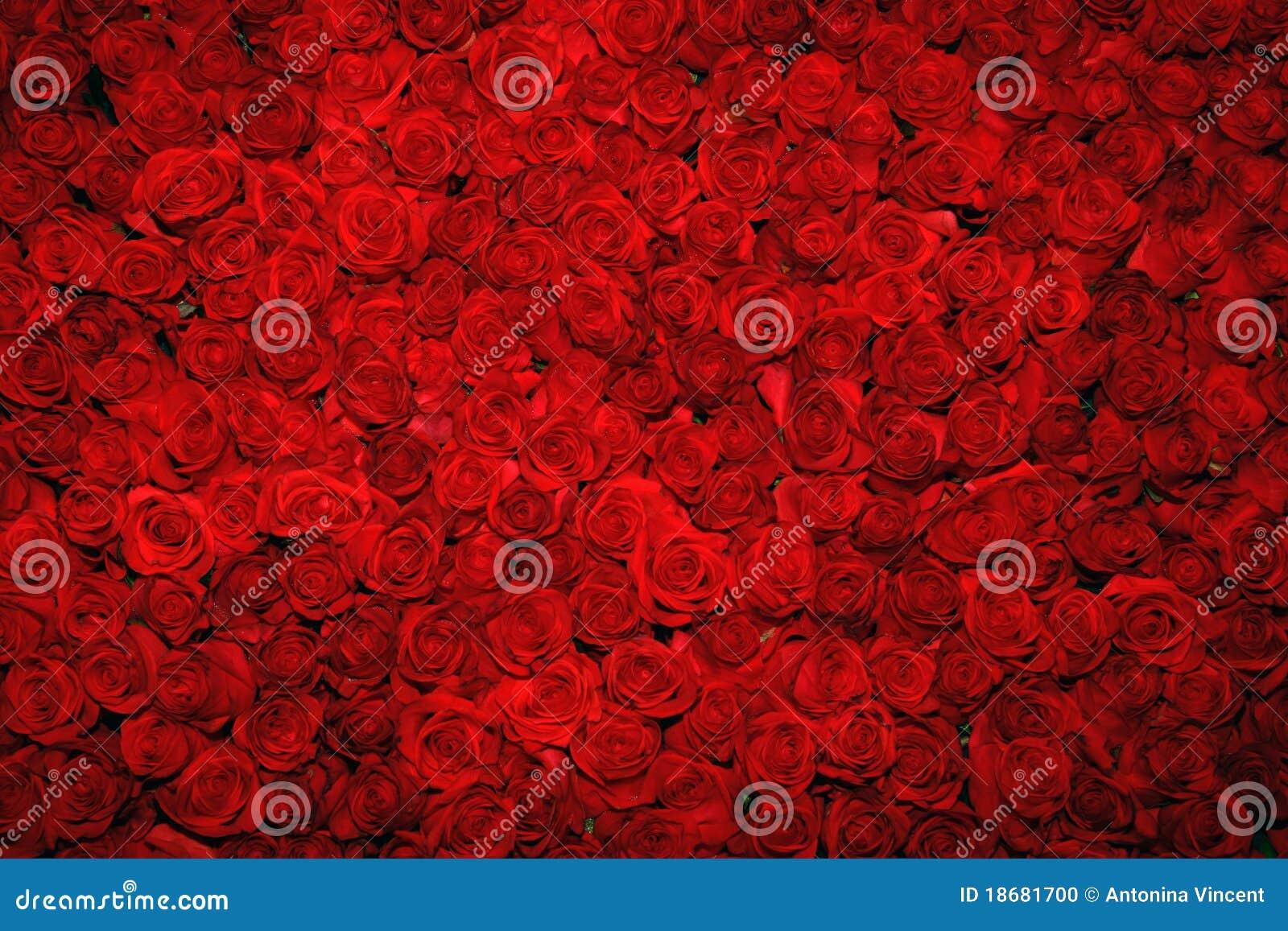 Roter Rosehintergrund